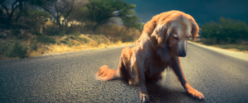 image of injured dog on a road
