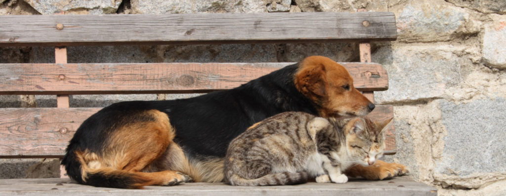 Cat and dog waiting on a bench