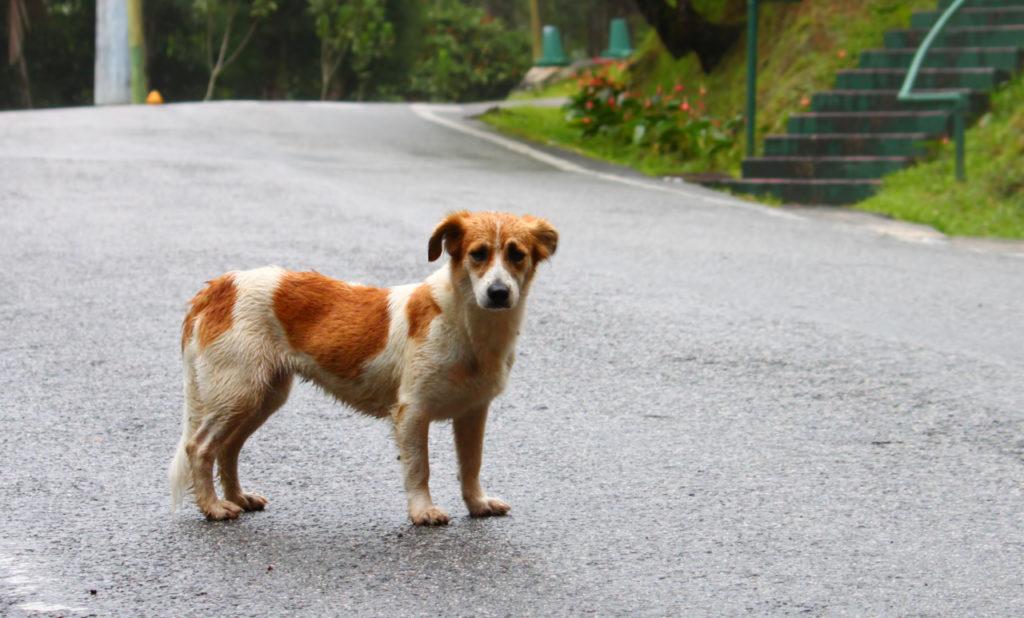 Lost stray dog image